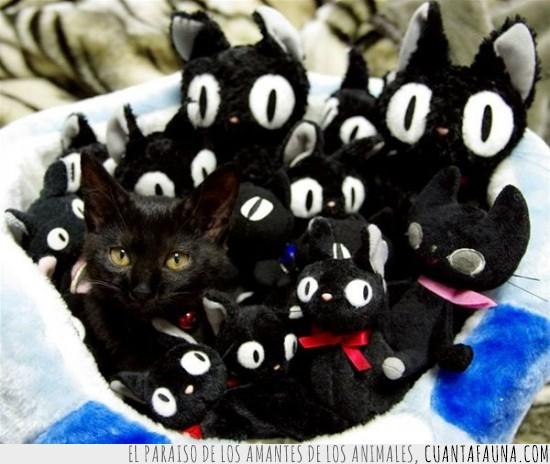 camuflaje,cesta,gato,gatos negros,muñecos,peluche