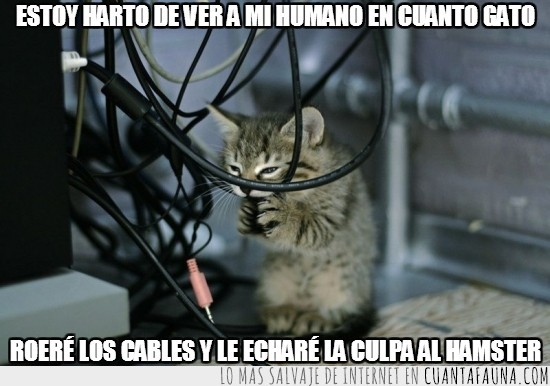 cables,cuanto gato,gato,hamster,ordenador,roer