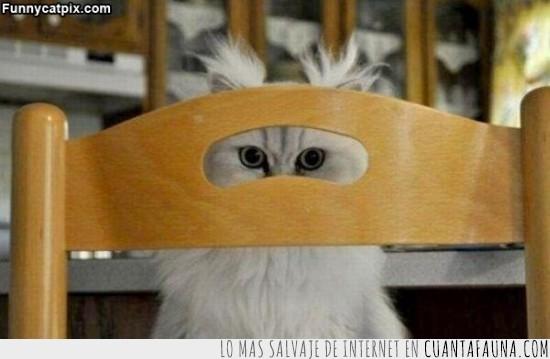 espiar,gato,silla,ver,vigilar