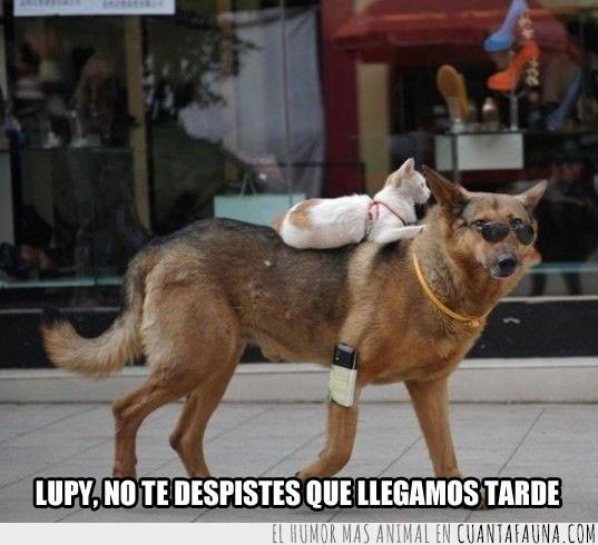 perro,sirviente,transportar