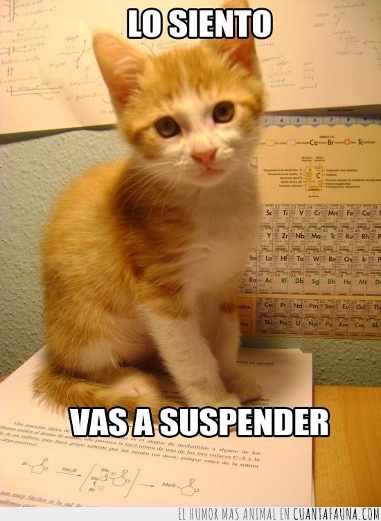 gato,orgánica,Paco,química,suspenso