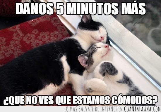 comodidad,dormir,Gatos,sueño,ya no hallo qué poner aquí