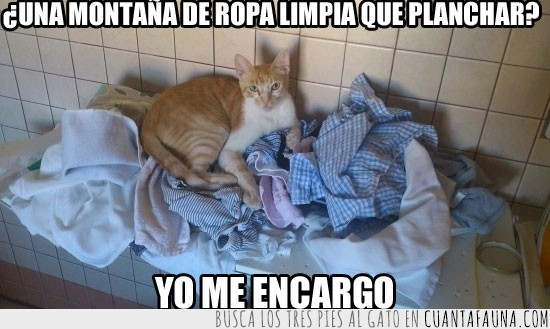 gato,plancha,ropa limpia,tumbado