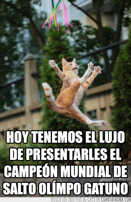 gato,gimnasia rítmica,juegos olímpicos,ole que arte,salto