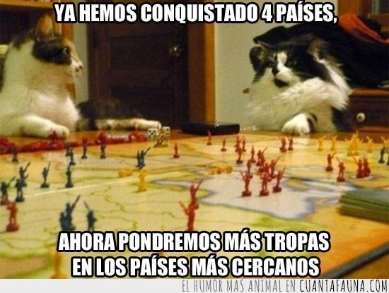 dominar,estrategia,gatos,mundo,países,plan,poseer