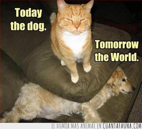 aplastar,cojín,gato,muy pronto,perro,pronto,su dominacion se acerca
