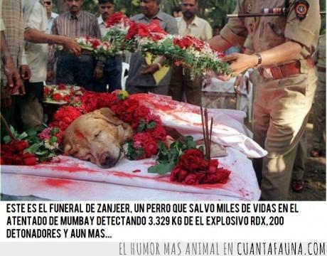 bombas,bombay,funeral,héroe,india,mumbai,perro