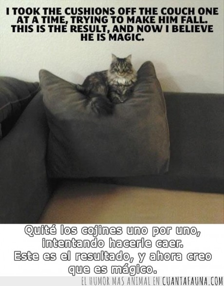 cojin,el gato voladoooor,gato,magicat,mágico,O quizás es pariente de Salem,quitar,sofa