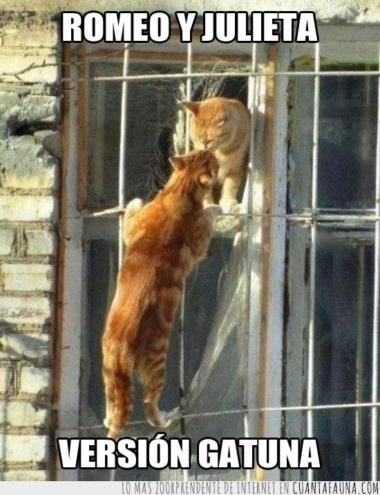 besandose,beso,gatos,ventana