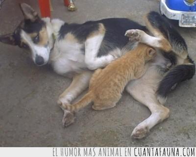gato,limpiando,limpiar,limpieza,perra
