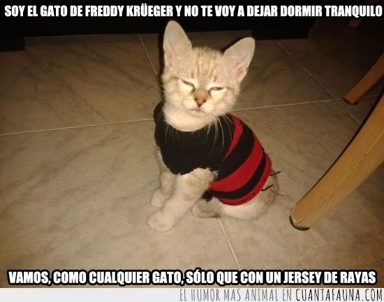 freddy krueger,gato,jersey a rayas,mascota,pesadilla,ropa
