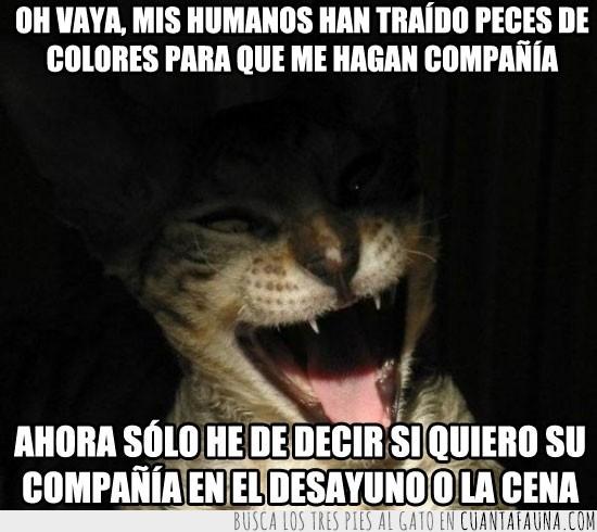 comer,gato,humanos,malvado,peces