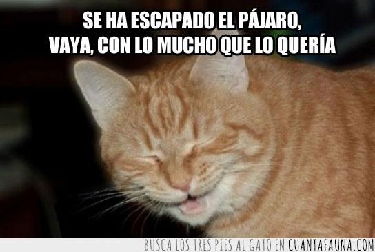 escapar,gato,malo,reírse,risa