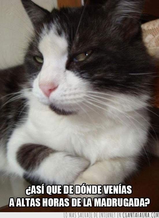 desconfiar,dudoso,gato,preguntar