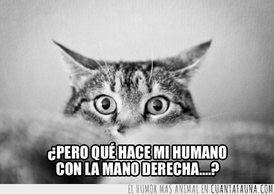 asco,derecha,gato,mano
