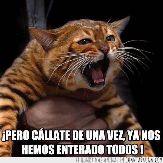 cabreado,callate ya,enfadado,enfado,gato,gritar