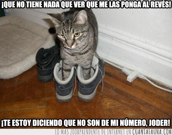 al reves,botas,gato,grandes,número,probar