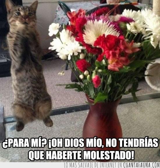 Amor,Cariño,Emocionado,Flor,Flores,Gato,Jarra,Molestado,Regalo,Rosas