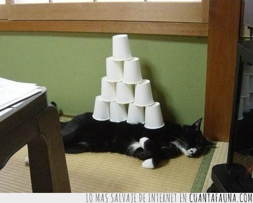 Acostado,Dormido,Gato,Torre,Vago,Vasos