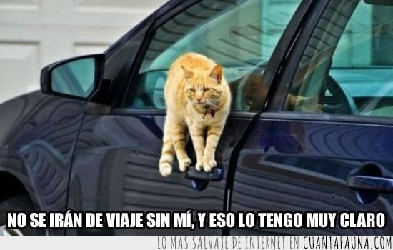 bloquear,coche,gato,mango,puerta,viaje