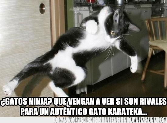 gato,karateka,patada voladora,salto