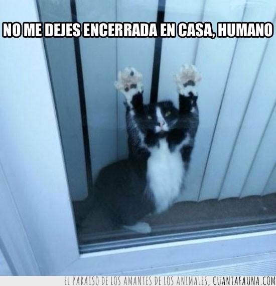 Ayuda,Casa,Cerrado,Gato,Liberar,Preso,Ventana