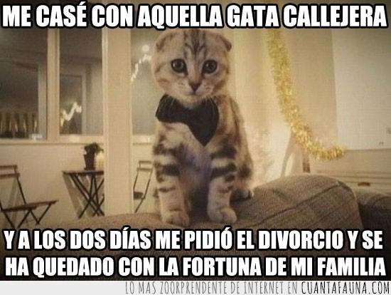 Boda,Divorcio,Familia,Fiesta,Fortuna,Gato,Lazo,Pajarita,Traje
