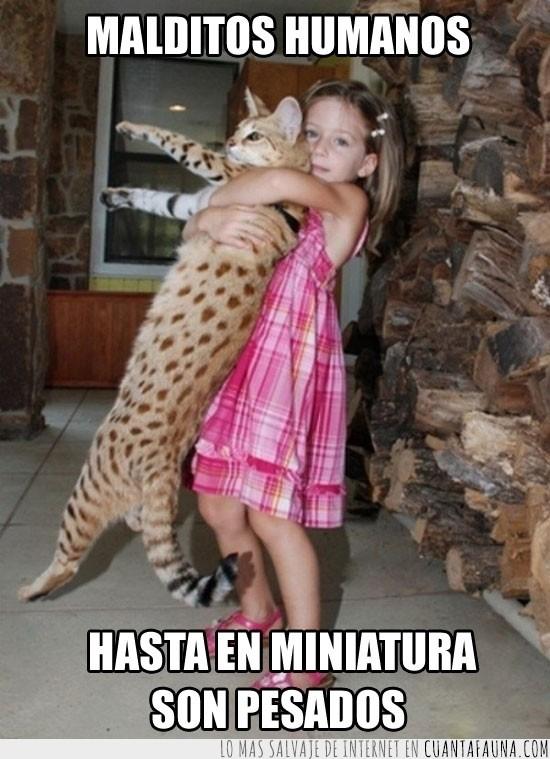 abrazo,enorme,gato,niña