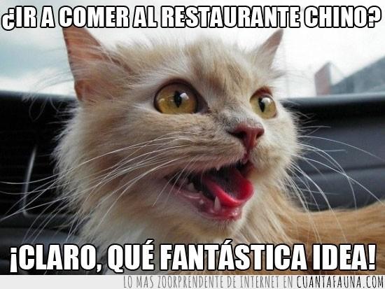 gato,idea fantastica,mentira,reírse,restaurante chino,risa