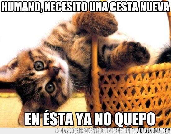 Caber,Canasta,Comprar,Gato,Nueva,Pequeño