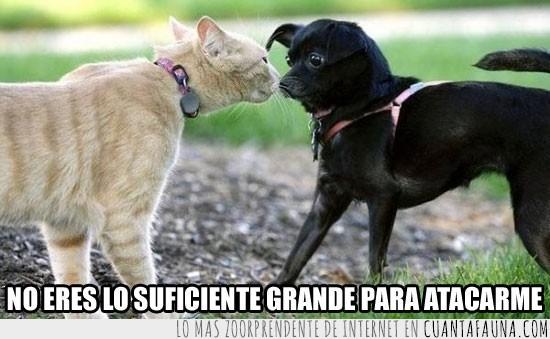 Atacar,Chico,Gato,Grande,Insuficiente,Oler,Perro