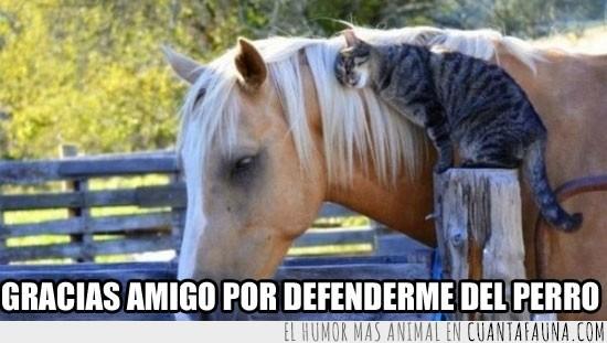Amigo,Amor,Caballo,Defensor,Gato,Granja,Querer