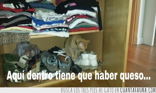 armario,chafardear,cotilla,zapatos