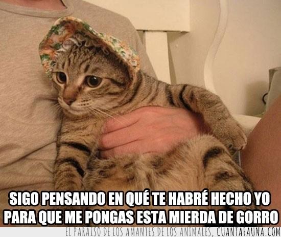 Descanso,Gato,Gorro,Sombrero
