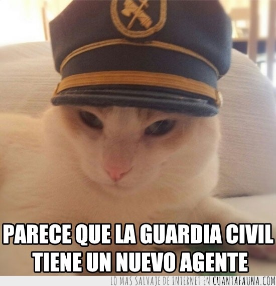 civil,gato,gatuna,gorra,guardia,guardia civil