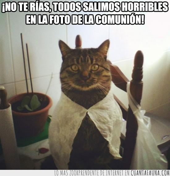 disfraces,foto,gato,primera comunion