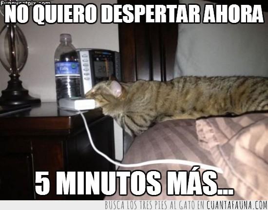 5 minutos,Cama,despertador,Despertar,Gato,Lunes,snooze,Sueño