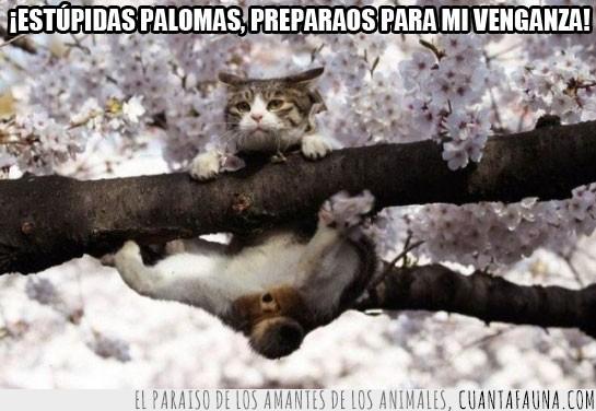 Apuntando,Arbol,Cagar,Gato,Palomas