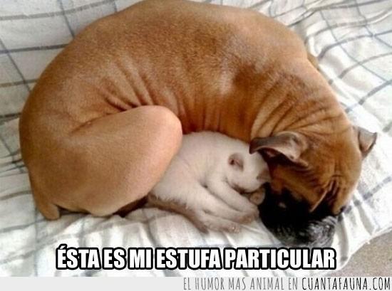 boxer,Caliente,Dormir,Gato,Perro