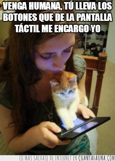 Gato,Nintendo DS,Pantalla,Plana,Tactil,Videojuego
