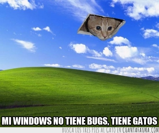 fondo de pantalla,gato,gato en el techo,windows xp