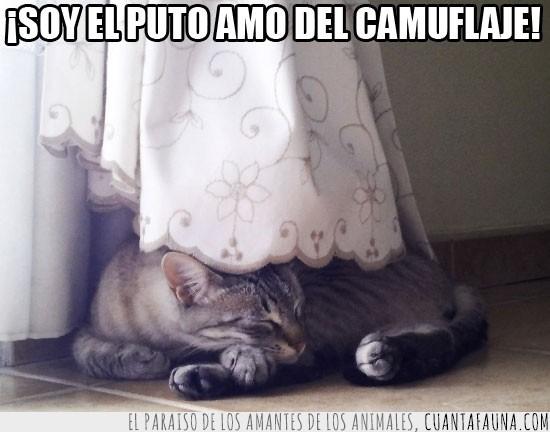 a la vista,camuflaje,cortinas,debajo,dormir,gato,ninja