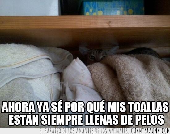 dejar,esconderse,escondido,gato,llenar,ninja,pelos,soltar,toallas