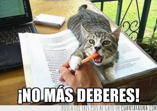 Deberes,Estudiar,Gato,Lápiz,Libro,Morder
