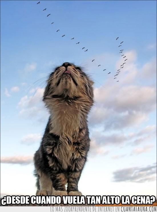 alto,bandada,cena,cielo,gato,mirar,pájaros