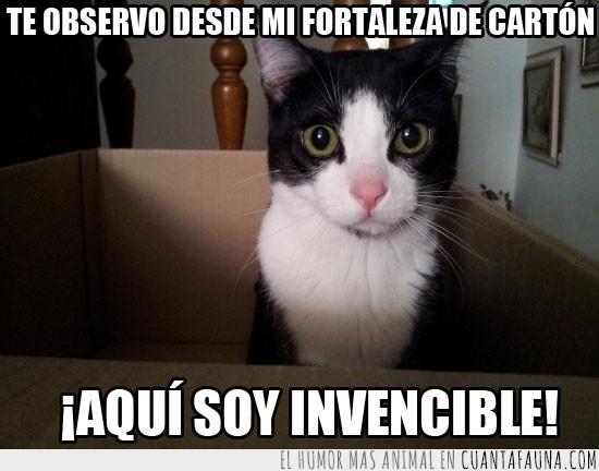 blanco,caja,cartón,fortaleza,gatito,gato,invencible,negro,observar
