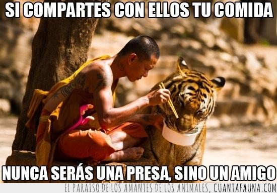 comida,compartir,gatito,monje,sabiduria oriental,tigre