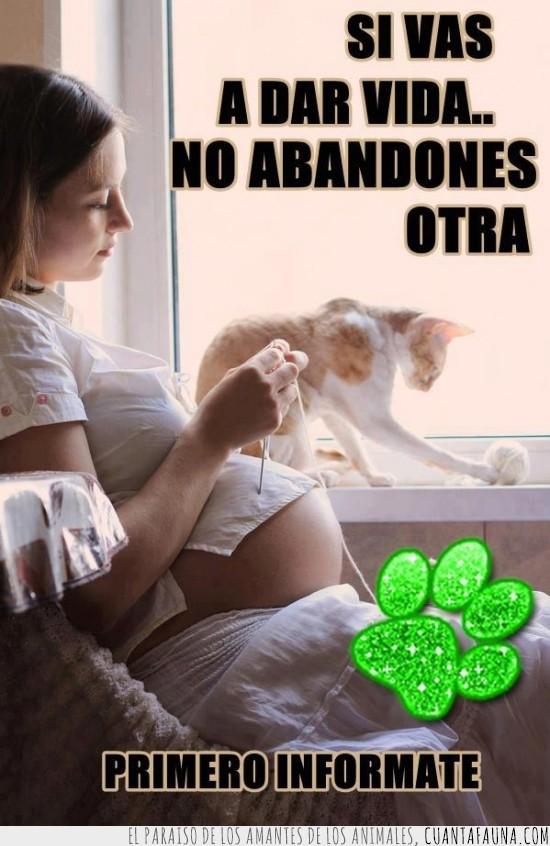 abandonar,cría,embarazada,embarazo,gato,no abandones,reflexiona,vida