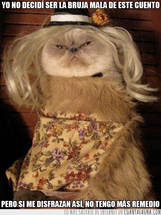 bruja mala,disfraz,gato,gracioso,pobre,sombrero,vestido