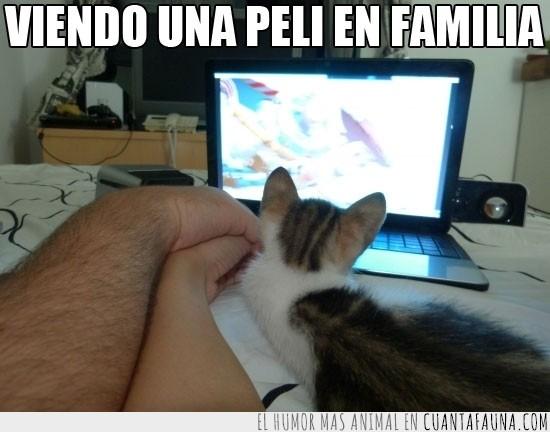 en familia,familia,gatito,pareja,peli,pelicula,portatil,toy story